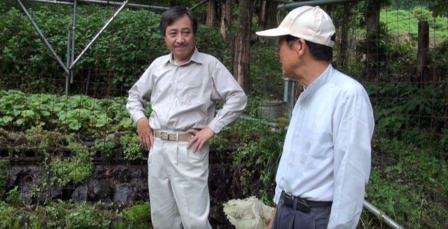 mikatawasabi1