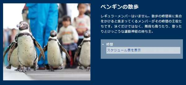 kinosaki-marineworld-penguin