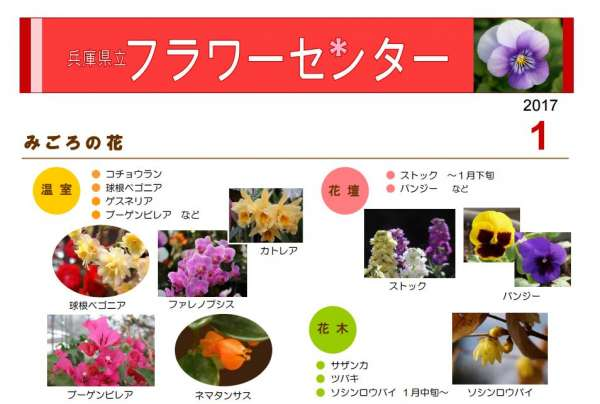 flower-center-shogatsu-2017-01