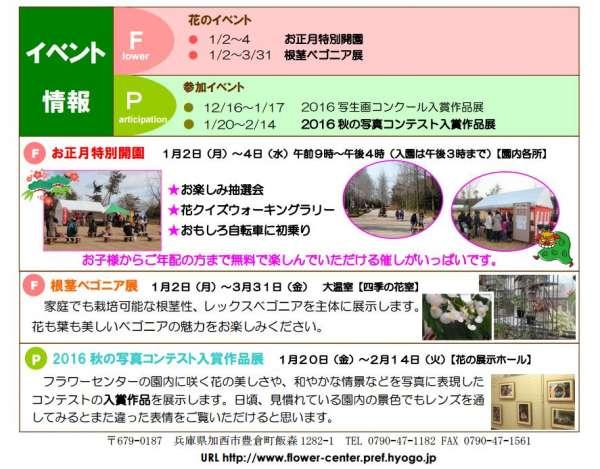 flower-center-shogatsu-2017-02