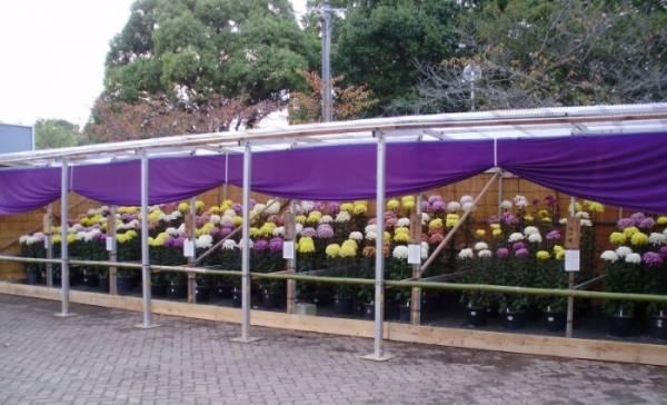 2020年10月18日(日)~11月10日(火)加古川市の日岡山公園で「加古川菊花展2020」が開催