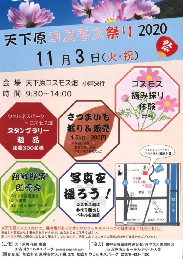 2020年11月3日(火・祝日)加古川市天下原ウェルネスパーク近くで「天下原コスモスまつり2020」が開催