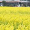 たつの市御津町【みつ菜の花まつり2019】が開催!